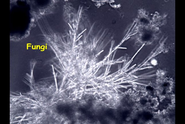 Fungi and yeast similar organisms fungi publicscrutiny Image collections