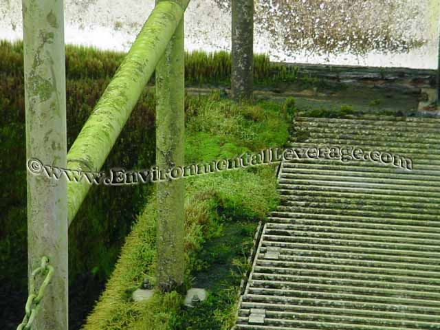 Algae on railings