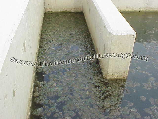 Algae Problems And Wastewater Lagoon Solutions