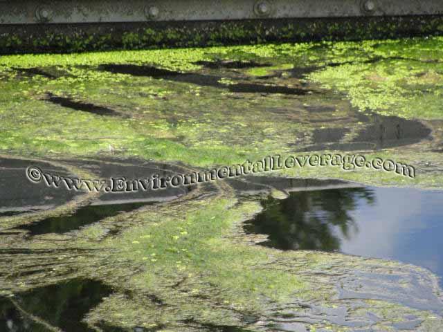 Algae images decomposition photo
