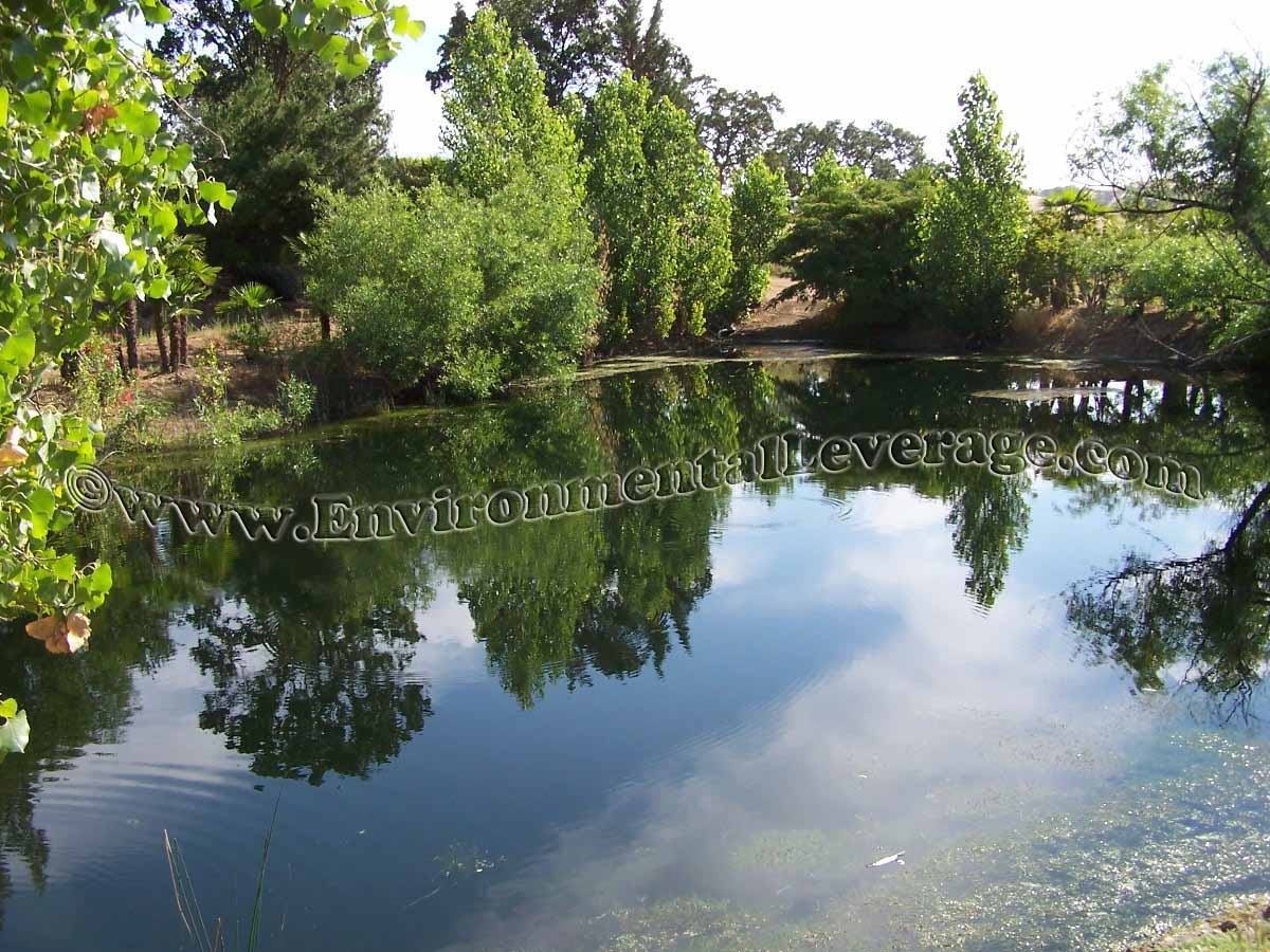 Index of images algae web ponds for Ornamental pond